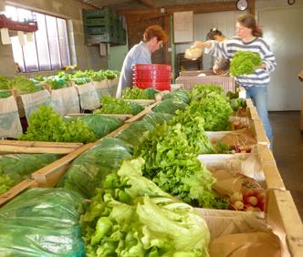 Les paniers de légumes biologiques